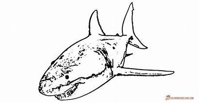 Shark Coloring Pages Printable Sheets Fish Cartoon