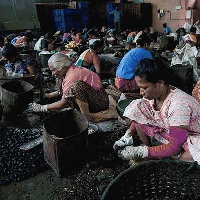 Cashew Workers Vietnam Nuts India Kollam Cashews