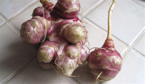 cuisiner crosnes classification des légumes les légumes tubercules