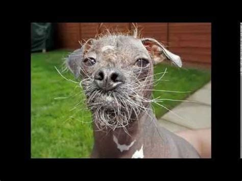 TOP UGLIEST ANIMALS IN THE WORLD YouTube