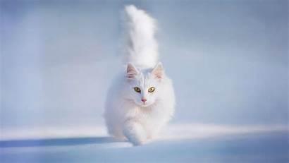 Cat Wiki Desktop Backgrounds