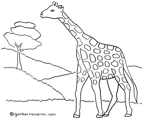 gambar mewarnai jerapah gambar hewan hewan jerapah