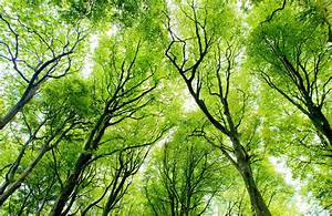 Bright Green Canopy Forest Wall Mural
