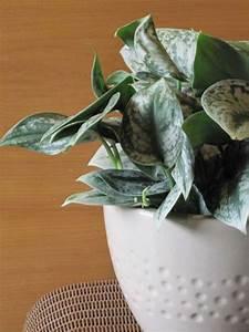Efeu Als Zimmerpflanze : welche zimmerpflanzen brauchen wenig licht ~ Indierocktalk.com Haus und Dekorationen