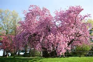 pink tree debrahorstphotography