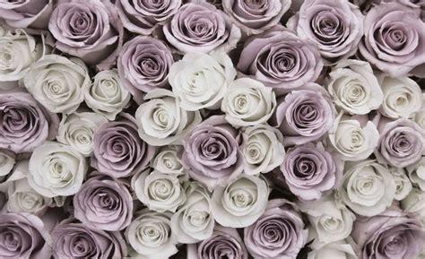 rosor blommor rosa vit fototapetonlinese