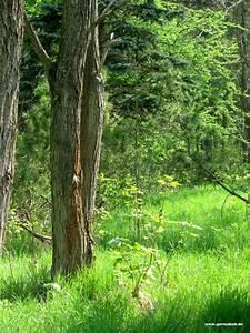 Bilder Vom Wald : fotos vom wald im fr hling der gartenratgeber ~ Yasmunasinghe.com Haus und Dekorationen