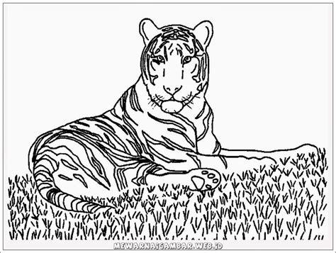 Coloring Harimau by Mewarnai Gambar Harimau Mewarnai Gambar