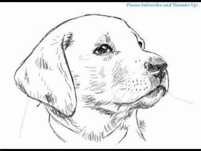 Dog Realistic Coloring Draw Lab Drawing Pages