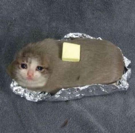tasty animal memes cat memes cat crying