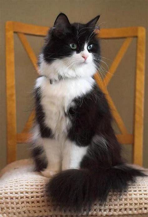 Black And White Cat Animalsss Pinterest