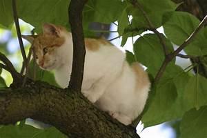 Repulsif Pour Urine Chat : r pulsif pour chat comment faire un r pulsif naturel ~ Melissatoandfro.com Idées de Décoration