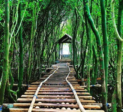 hutan mangrove pasir mendit romantisme senja  ujung