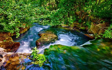 wallpaper water stream forest  nature