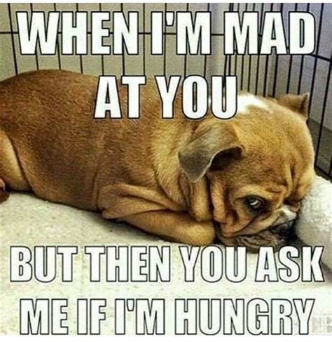 Mad At You Meme - funny hungry meme www imgkid com the image kid has it