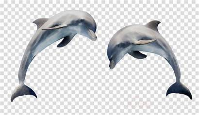 Dolphin Clipart Dolphins Cartoon Jumping Bottlenose Common