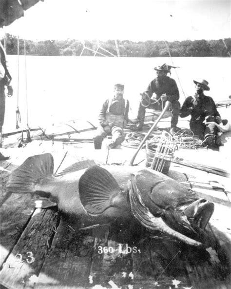 florida grouper goliath jupiter fishermen inlet fishing fish fl 1910 west commons history memory key wikimedia definition 1910s wikipedia three