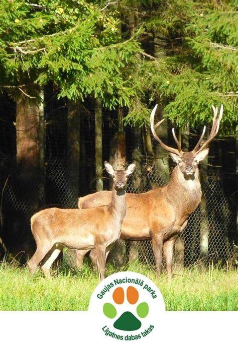 Pastaiga pa Gaujas nacionālā parka Līgatnes dabas takām, 31-01-2021 - Brīvdabas pasākumi - Kas ...