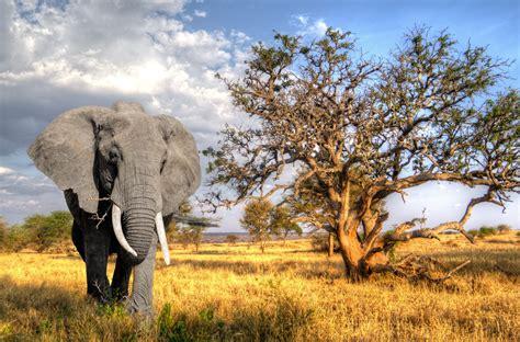 Safari Animal Wallpaper - wallpaper animals wildlife africa wilderness