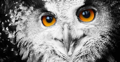 Orange Eye Wallpaper by Up Wallpaper Of A Owl Hd Animals Wallpapers