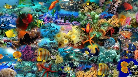 Cool Fish Backgrounds ·①