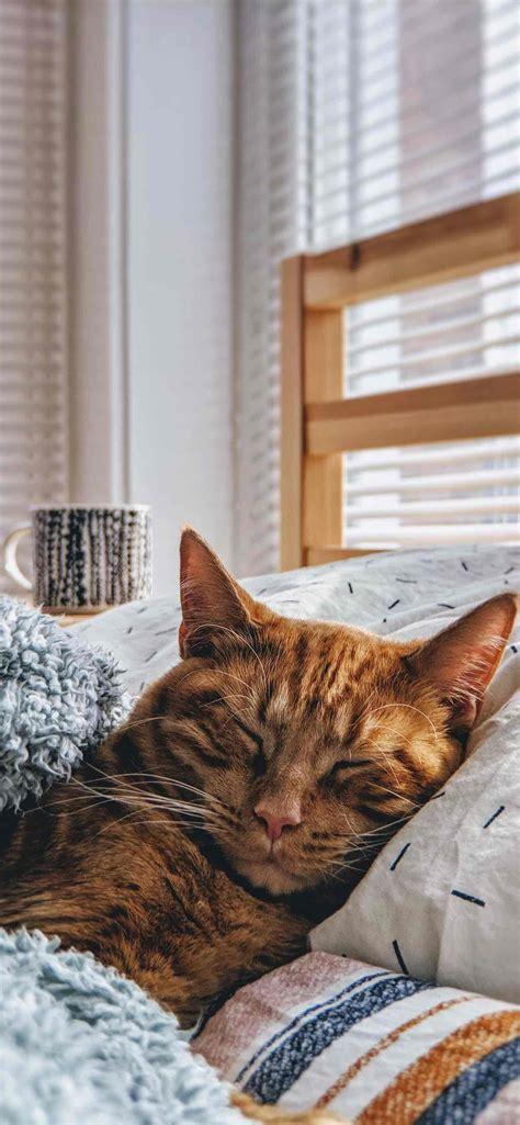 cat wallpaper iphone backgrounds
