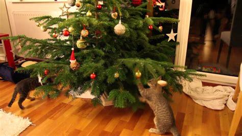 Weihnachtsdeko Für Den Gartentisch by Weihnachten Ein F 252 R Katzen