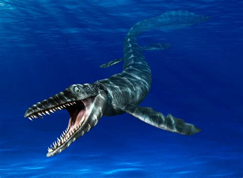 related keywords suggestions  mosasaurus