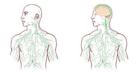 infiammazione vasi linfatici autismo collegamento diretto tra sistema nervoso centrale