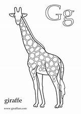 Giraffe Printable Coloring Pdf Colouring Alphabet Letterland Crafts Pages Giraffes Kid Baby Letter sketch template