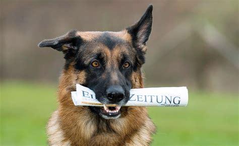 wie schlau ist ihr hund iq training fuer vierbeiner iq