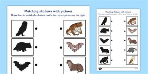 wild nocturnal animals shadow matching worksheet wild