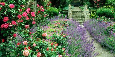 best plants for cottage gardens