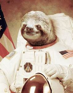 [Image - 437645] | Astronaut Sloth | Know Your Meme