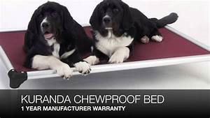 kuranda chew proof dog bed review youtube dog beds and With chew proof dog bed reviews