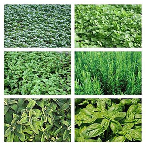les herbes de cuisine astuces de cuisine et herbes aromatiques paperblog