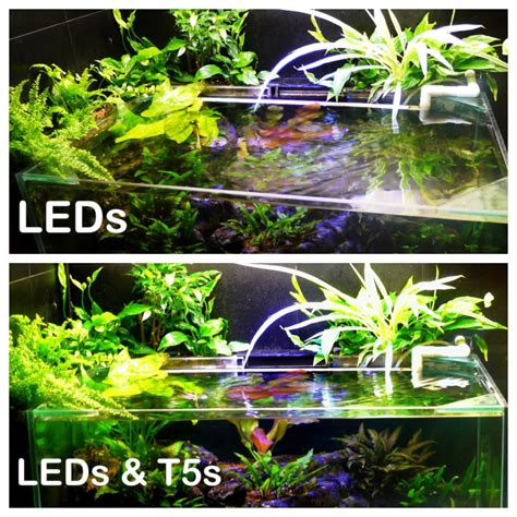 led flood lights wattage and how many uk aquatic plant