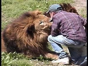 Gaged Animal Attack Lion, World's Largest Chimp, Snake ...