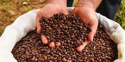 What are the best costa rican coffee beans? Tour a Costa Rica Coffee Plantation for the Ultimate Java Fix
