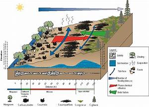 Vegetation Transects