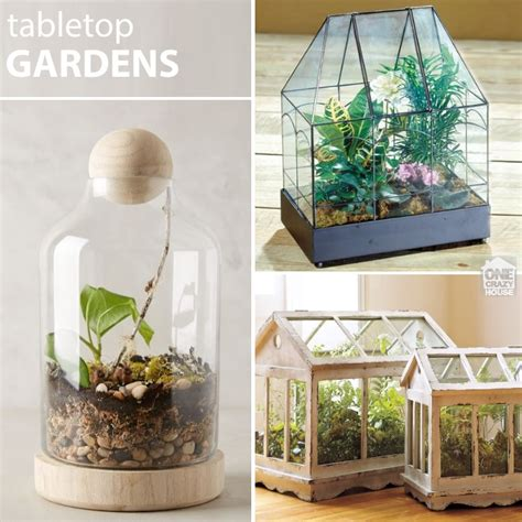 terrarium how to 22 ways to make a terrarium