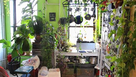 apartment transformed into greenhouse filled with