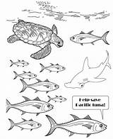 Tuna Drawing Yellowfin Fish Coloring Getdrawings sketch template