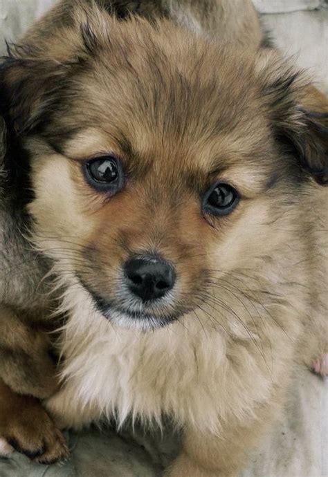 Fileabandoned  Ee  Dog Ee   Jpg Wikimedia Commons