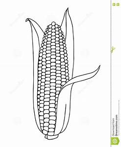 Corn Graphic Art Black White Illustration Stock Vector ...