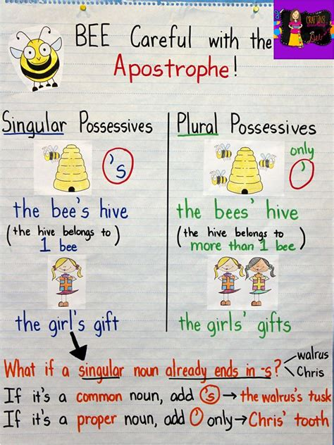 apostrophe in possessives anchor chart singular vs