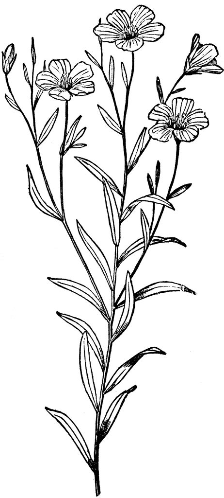 flax plant clipart