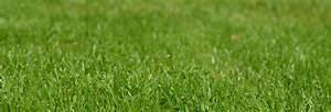 Semer Gazon Periode : semer son gazon sa pelouse au printemps tous nos conseils ~ Melissatoandfro.com Idées de Décoration