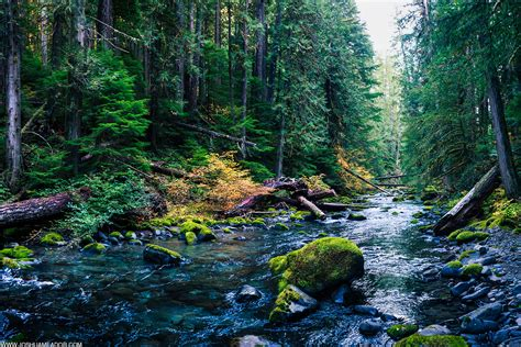 wilderness forest oregon woods growth creekside river bull fork everglades cicada nature stream wallpapers trails ef journal office landscape solidarity