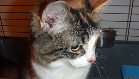 cat dangerous most cats earth domestic kittens rescuing sunderland took seen ve them before
